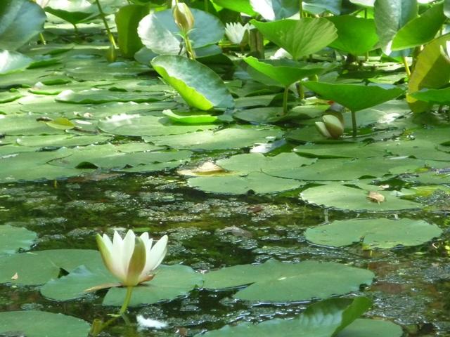 Un jardin naturel dans le 20 me ici et ailleurs for Le jardin naturel