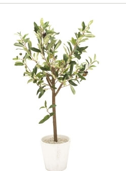 olivier-truffaut